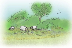 natuurvriendelijk-beheer